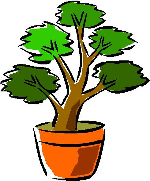 Bonsai Clipart Bonsai Tree Clipart