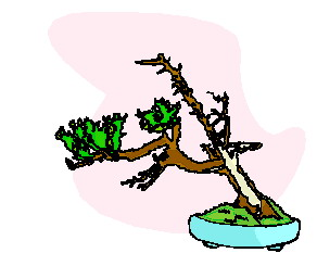 Clip art Flowers and plants Bonsai