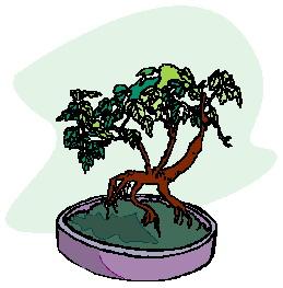 Clip Art - Clip art bonsai 482905 - 22.2KB