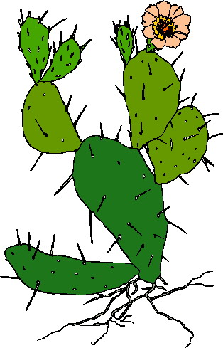 Cactus Flower on Free Cactus Clip Art Pictures And Images
