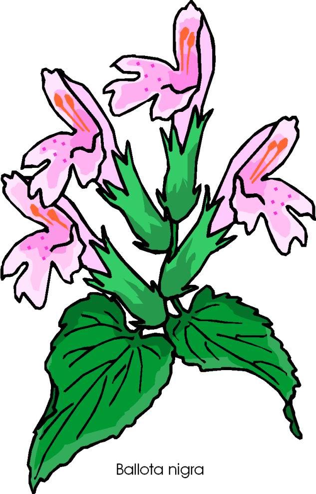 Clip art » flowers