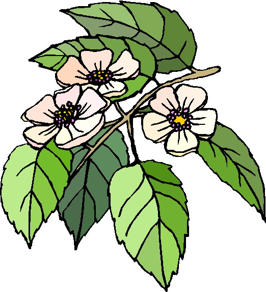free clipart plants and flowers - photo #22