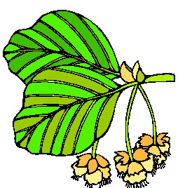 Leaves clip art