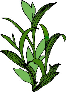 Leaves clip art
