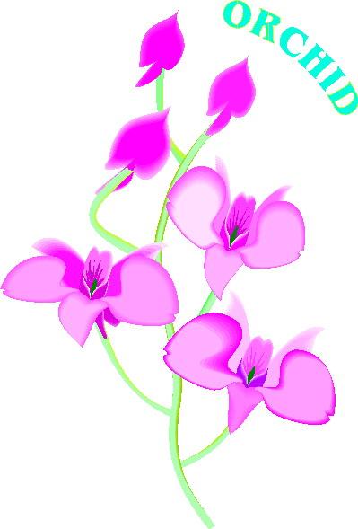 Orchid clip art