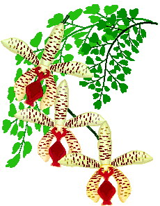Clip art Flowers and plants Orchid