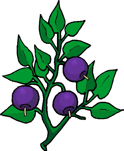 clipart of plants - photo #16