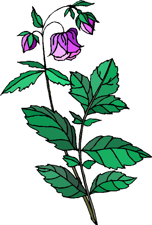 free clipart plants and flowers - photo #30