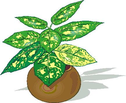 clip art flowers and plants plants picgifs com rh picgifs com plants clip art free plant clipart cycle