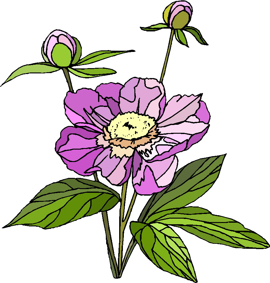 free clipart plants and flowers - photo #16