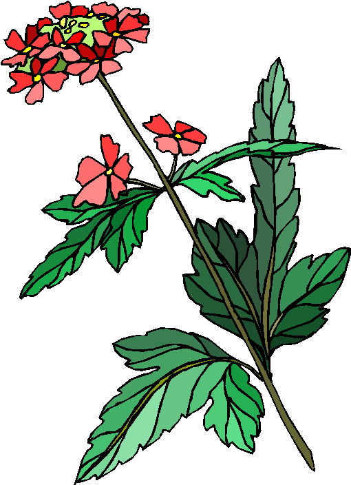 clipart of plants - photo #45