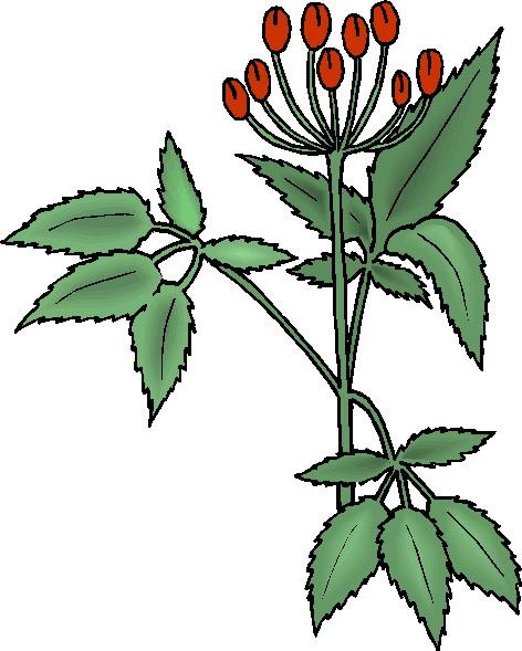 Clip art Flowers and plants Plants