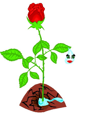 Roses Clip art Flowers and plants