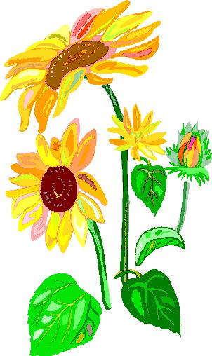sunflower clip art flowers and plants picgifs com rh picgifs com sunflower clipart images sunflower clipart images