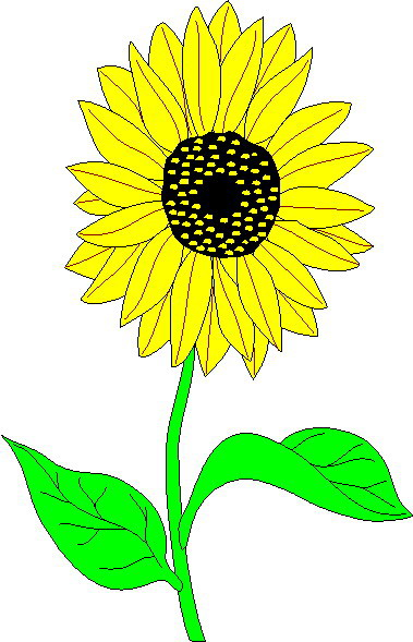 sunflower clip art flowers and plants picgifs com rh picgifs com clip art sunflowers black and white clipart sunflower border