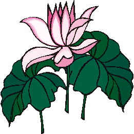 Water lily Clip art Flowers and plants
