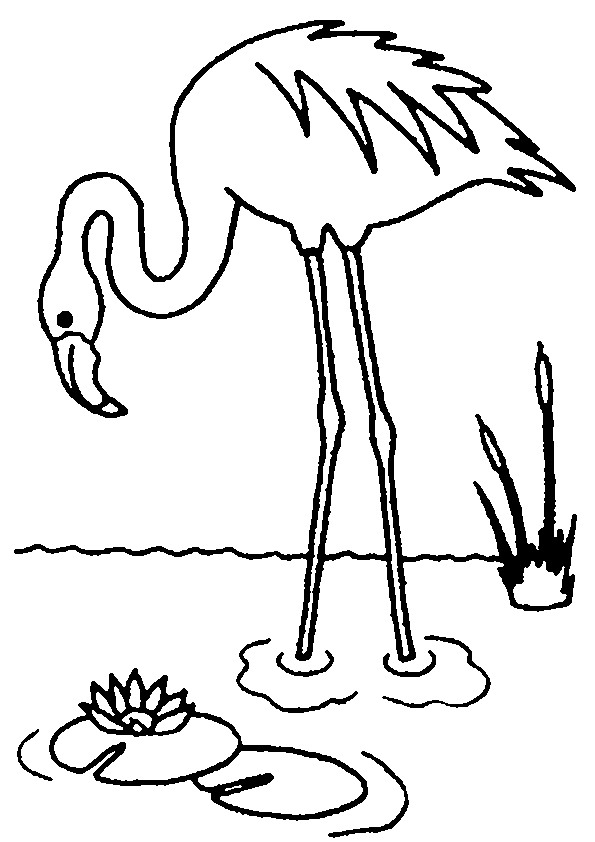 flamingo coloring pages animal coloring pages - Flamingo Coloring Page