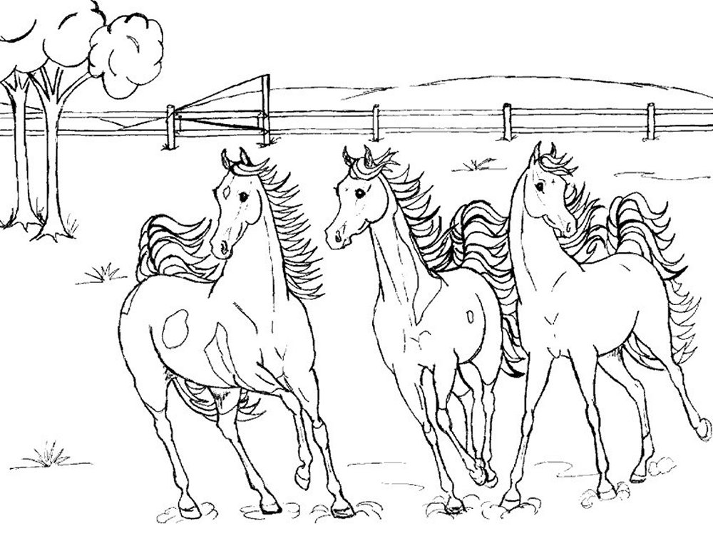 Coloring Pages Animal Horse