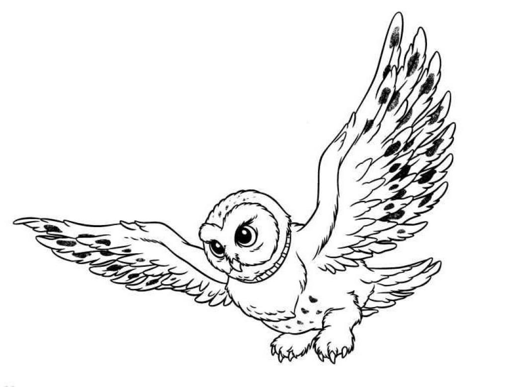 Owl Coloring Pages | PicGifs.com