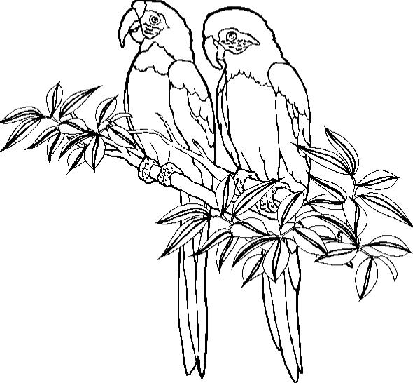 Parrot Coloring Page Animal Coloring Page | PicGifs.com