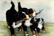 Bernese mountain dog dog graphics