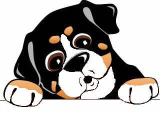 Dog graphics Bernese mountain dog