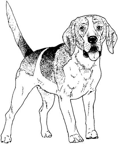 Black and white dog drawing - photo#22