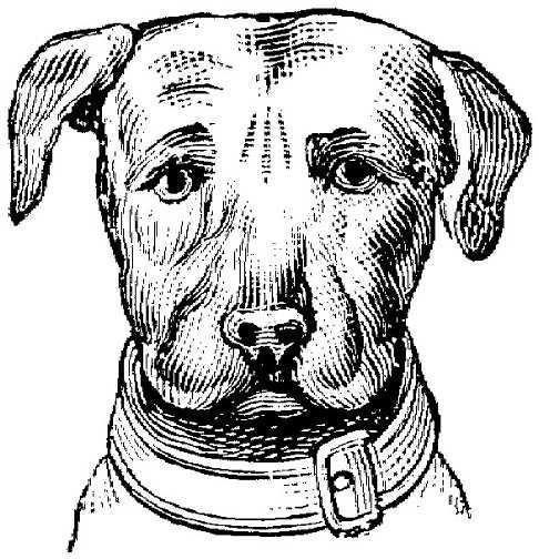 Dog Graphics Black White Dogs