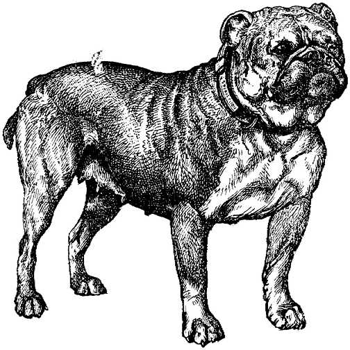dog graphic black white dogs picgifs com