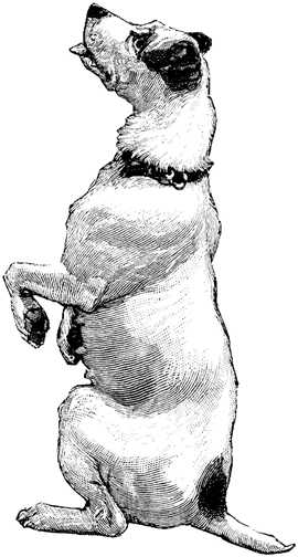 Black white dogs dog graphics