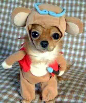Dog graphics Chihuahua