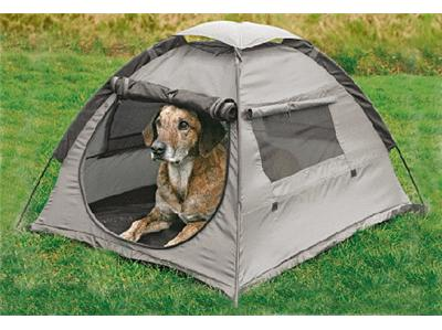 Dog camping dog graphics