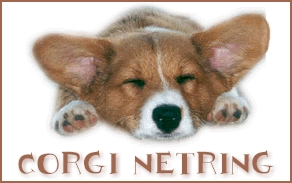 Welsh corgi dog graphics