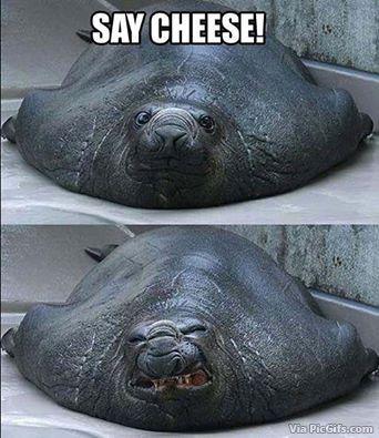 Humor facebook graphics