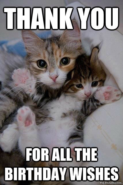 Funny Thank You Cat Memes : Thank you facebook graphics picgifs