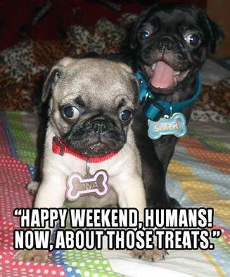 happy weekend, pug