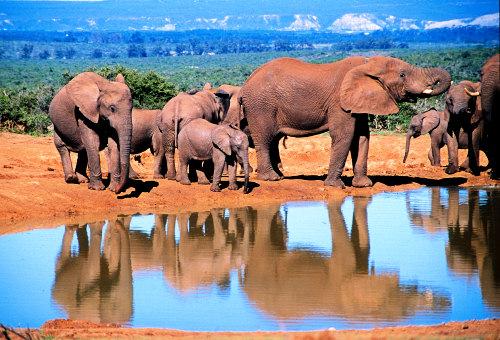 Africa graphics
