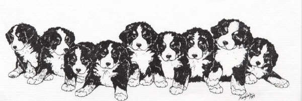 Bernese mountain dog Graphics and Animated Gifs PicGifscom
