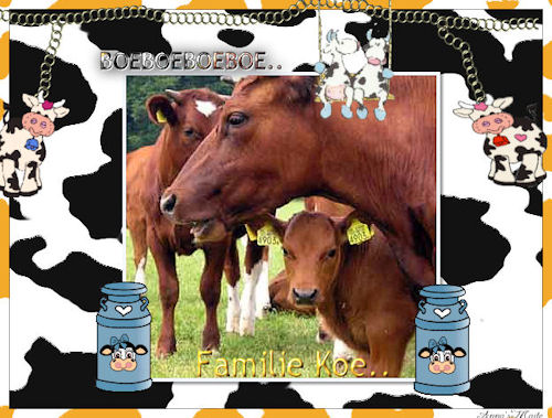 Cows graphics