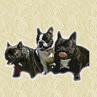 French bulldog graphics
