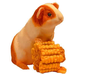 Guinea pig Graphics and Animated Gifs | PicGifs.com