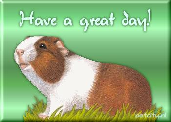 Guinea pig graphics