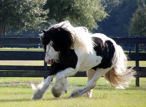 Horses Graphics Picgifs Com