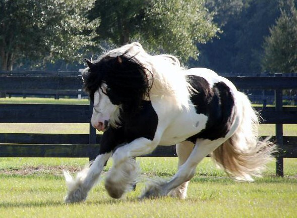 Horses graphics
