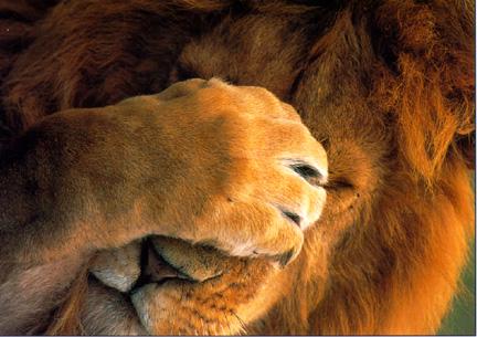 graphics-lions-406659.jpg