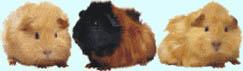 Marmot graphics