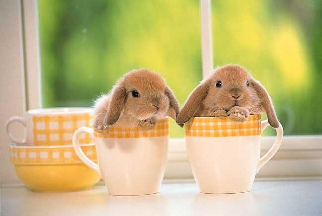Rabbits graphics