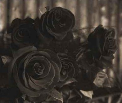 Roses graphics