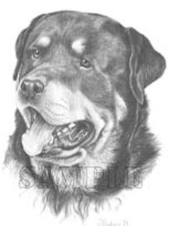 Rottweiler Graphics