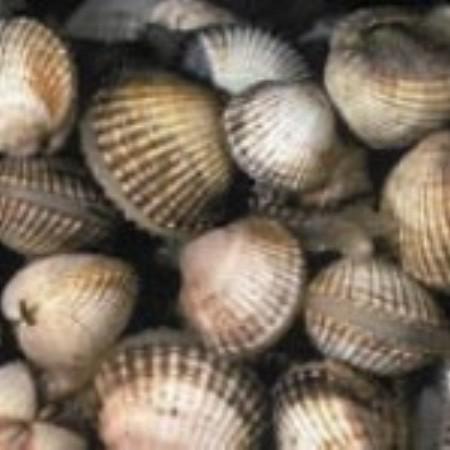 Shells graphics